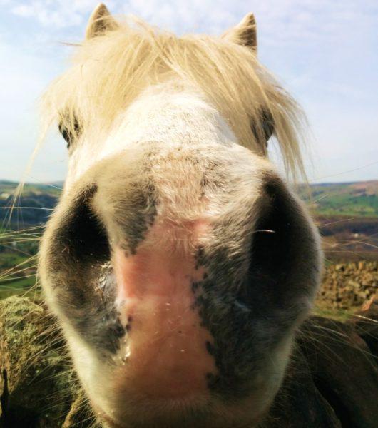 Shatton Mast Pony